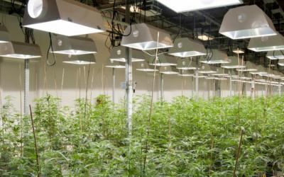 Horizons Medical Marijuana ETF to Debut April 5th